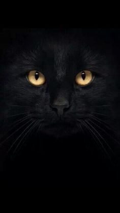 Black Cat Iphone 5 Wallpapers Iphone Wallpapers And All Such