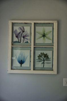 old window pane with art, diy wall art, flower art, x-ray flower art. Creative way to re-use a window pane for wall art