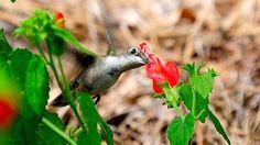 Botanical Gardens Columbus Ga Blog Pins Pinterest