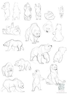Bear concepts by Therese Larsson, via Behance