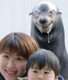 photo bombs animals -  holy shmow thats a scary seal