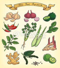 ginger root drawing - Google Search