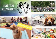 Felvonulás, flahsmob, jógaóra, főzőkurzus, krétázás, fórum az állatokért