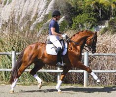 The Oldenburg Horse Breeders' Society | OH | Stallion Directory Sir Gregory