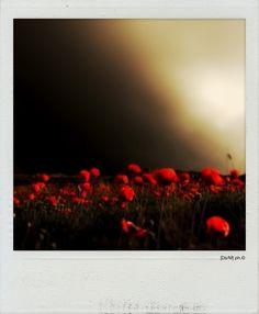 FRAGILE È la prospettiva dei panorami, singolare, unica, la vista allunga gli orizzonti e anneghi nei gesti perfetti che fanno i petali al vento,  sinuosi, silenziosi, come un mare narcotico, prigione di parole controtempo che ristagnano sulla pelle, loro, nascoste nelle pieghe dei giorni bagnati dal piangere, finta rugiada che segue il ritmo del sangue.   Fragile.  Fragile.  [forse].   http://paralleluniverseinpolaroid.wordpress.com