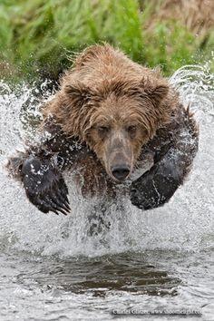 Charging Bear, oh Hell no!