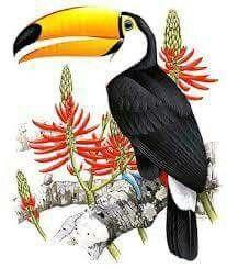 Colour Pencil Shading, Toco Toucan, Graffiti Wall Art, Bird House Kits, Bird Artwork, Art N Craft, Arte Pop, Bird Illustration, Happy Art