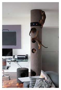 Fun Stuff for Cats: hicat indoor climbing pole . terrain  de jeu génial pour gros minets...