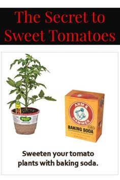 The secret to sweet tomatoes is this simple kitchen staple.