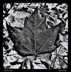 Fall for You by Jolie Buchanan #nature