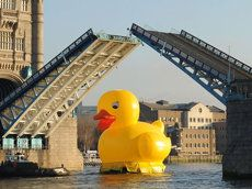 Giant Rubber Duck Floats Down the River Thames...  @Becky Sonnier ,  I just can't see something like this without thinking of Jack!  ;)  Can you imagine...  a GIANT duckie!