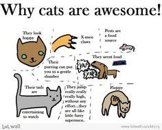 cat awesomeness