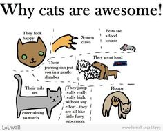 cat awesomeness