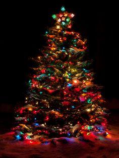 Oh Christmas Tree, Oh Christmas Tree.....
