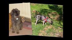 Aντίο Ρόκι μου....φιλαράκι μου Dogs, Animals, Animales, Animaux, Pet Dogs, Doggies, Animal, Animais