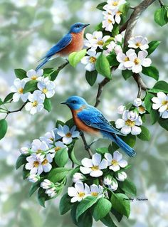 Flowers and birds Nature beauty.