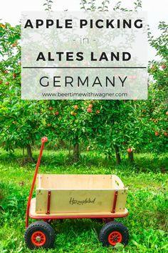 Apple Picking | Beer