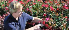 Pruning Drift® Roses, P. Allen Smith