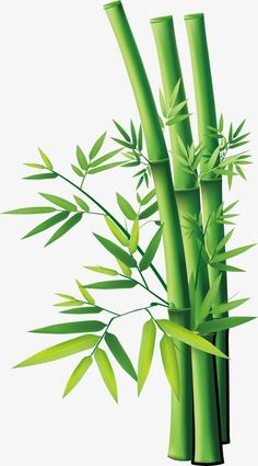 Bamboo Roof pngtree-Bamboo - Click Image to See More Reference of Bamboo Roof pngtree Bamboo Roof, Bamboo Table, Bamboo Art, Bamboo Drawing, Bamboo Background, Seamless Background, Bamboo Wallpaper, Bamboo Tattoo, Bamboo Shades