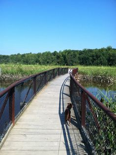 Point of Rocks Park. Marshes, boardwalks, mostly-shaded walk.  oh my goodness we are moving to a swamp :(