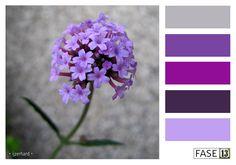 #FASE13 #kleurinspiratie voor je interieur! ~ Ijzerhard