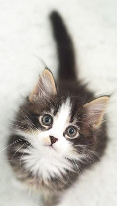 OMG! baby version of my Whiskers - even the eyes & how he looks at me - so sweet!