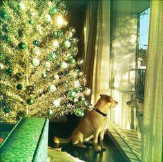Time to shop for a mid-century Christmas tree! (from retrorenovation.com)
