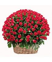 100 Red Roses Arrangement 3 - 4 ft High