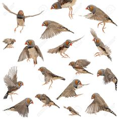 Finches Images, Stock Pictures, Royalty Free Finches Photos And ...