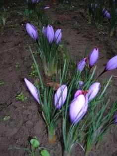 fiori all'alba