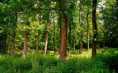 Čifáre - les Roman, Trunks, Plants, Drift Wood, Tree Trunks, Plant, Planets
