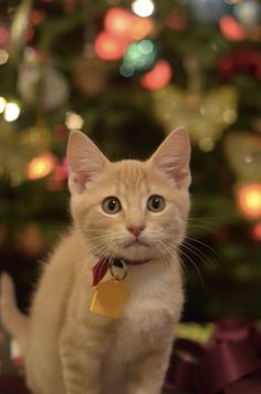 Kitten Gets A Forever Home For Christmas