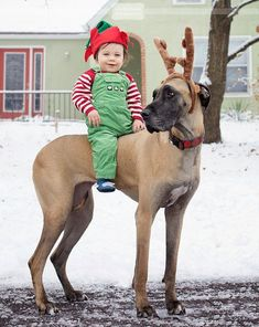 I pinned this because Great Danes are my favourite type of dog and when I am older I want to have one before I have a kid. I just love how big great Danes are compared are to babies and kids, also I love how they are such gentle dogs. Big Dogs, I Love Dogs, Cute Dogs, Cute Dog Costumes, Baby Animals, Cute Animals, Dane Puppies, Doggies, Great Dane Puppy