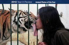ANIMAL PIX OF 2013