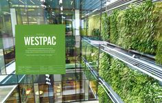 Both the Westpac Building and the Novotel Hotel are 6 Green Star-rated interior projects and stand out projects for both Auckland and New Zealand. Interiors Magazine, Green Walls, Sustainable Design, Auckland, New Zealand, Sustainability, Environment, Gardening, Star