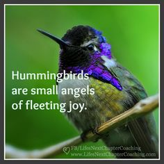 Hummingbird Quotes, Hummingbird Symbolism, Computer Skins, Inspirational Message, Body Mods, Beautiful Birds, Motivational Quotes, Joy, Hummingbirds