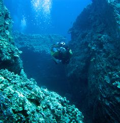 Google Image Result for http://www.reefpirates.com/images/oahu_baboons_nose.jpg
