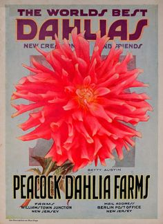 The world's best dahlias /. Dahlialand, N.J. :The Nursery.. biodiversitylibrary.org/page/46109304