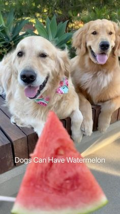 Little Dogs, Big Dogs, Dogs And Puppies, Doggies, Funny Dogs, Cute Dogs, Animals And Pets, Cute Animals, All Types Of Dogs