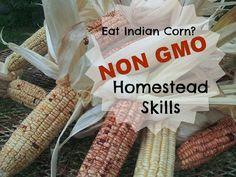 TSG: Eat NON GMO With Native American Corn