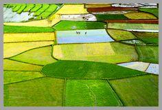 Les rizières de riz Vietnam, Farmer, Fields, Golf Courses, Tropical, Landscape, Gardens, Fruit Garden, Good Photos