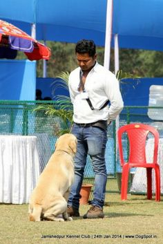 Jamshedpur Obedience Dog Show 2014 Rajendra Prasad, Dog Show, Dog Pictures, Labrador Retriever, Board, Dogs, Labrador Retrievers, Pictures Of Dogs, Sign