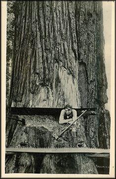 Woodcutter in Canada