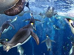 1. 'Bubble-jetting emperors', Ross Sea, Antarctica - The Independent