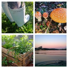 Jaffa-laatikon uusi elämä, Ilse Jacobsenin kumisaappaat, myrkku sieni, istutus, syys piha