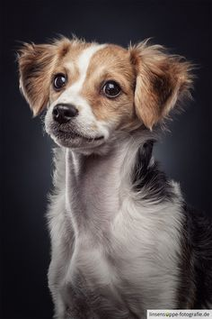 Portrait of a cute puppy - feel free to share, like and follow my work