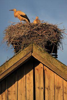 Żywkowo - bociania wieś / Żywkowo - village of the storks