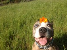 Pit bulls love flowers!