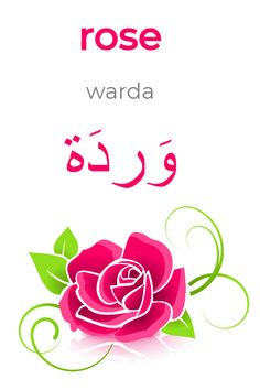 """Learning Arabic MSA (Fabienne) The Arabic word for """"rose"""". Vocabulary Strategies, Vocabulary Games, Arabic Phrases, Arabic Words, Arabic Conversation, Spoken Arabic, Learn Arabic Online, Spelling Activities, Listening Activities"""