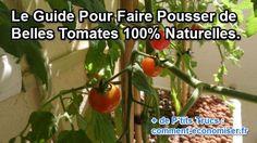 Avez-vous déjà essayé de faire pousser des tomates vous-même ? Rien de tel que celles qui poussent à la mode Bio dans notre jardin. Envie de connaître mes secrets ?  Découvrez l'astuce ici : http://www.comment-economiser.fr/faire-pousser-tomates-bio.html?utm_content=buffer14fdc&utm_medium=social&utm_source=pinterest.com&utm_campaign=buffer